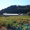 黒大豆収穫で丹波篠山までツーリング♪