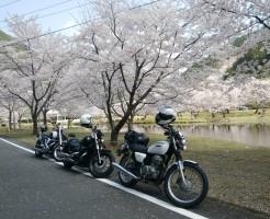 下北山村スポーツ公園 桜
